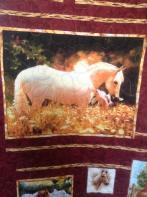Peggy's Texas Horses